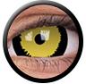 ColourVue Sclera Crazy Lens 17 mm ( 2 čočky) - nedioptrické / Tigera