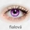 Iris / Fialová