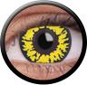 Magic Eye Crazy (2 čočky) - nedioptrické / Black wolf