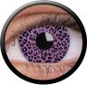 Magic Eye Crazy (2 čočky) - nedioptrické / Leopard
